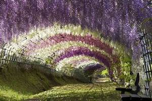 1000+ images about Wickedly Wisteria on Pinterest