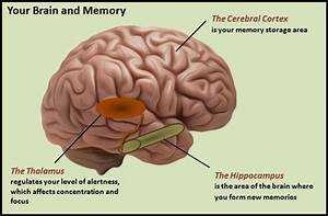 How To Improve Memory  Focus  And Mental Acuity Naturally