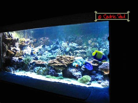 imperator aquarium d amn 233 ville moselle 54 aquariums publics fiche et documentation l