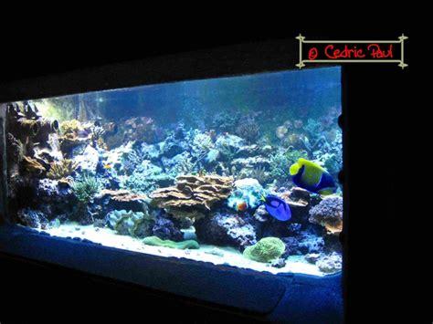 imperator aquarium d amn 233 ville moselle 54 aquariums