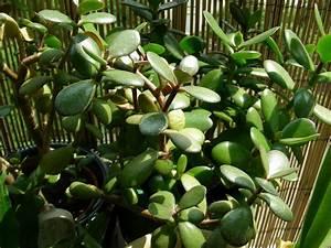 plante fleurie interieur plante fleurie d int rieur paris With chambre bébé design avec plantes grasses d intérieur fleuries