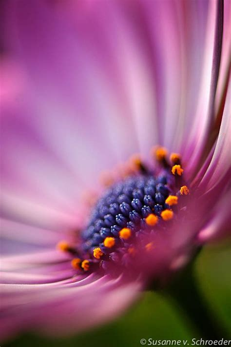 macro flower photography  pinterest flower photography
