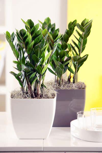 Zimmerpflanzen Kaufen Nahe Bonn