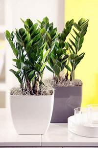 Pflanzen Wenig Licht : zimmerpflanzen garten einebinsenweisheit ~ Markanthonyermac.com Haus und Dekorationen