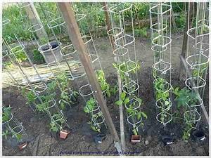 Bohnen Anbauen Anleitung : tomaten garten ~ Whattoseeinmadrid.com Haus und Dekorationen