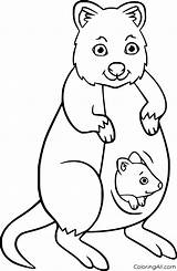 Quokka Coloring Coloringall Mother sketch template
