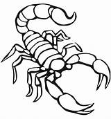 Scorpion Coloring Pages Printable Scorpions Animals Preschool Animal Drawing Traceable Super Print Crafts Worksheets Ide Preschoolcrafts Kindergarten Dari Disimpan sketch template