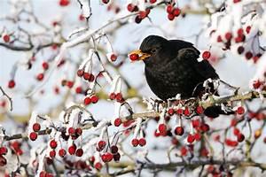 Futterhaus Für Vögel : v gel im winter sailer verlag ~ Articles-book.com Haus und Dekorationen