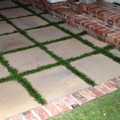 concrete squares and monkey grass landscaping