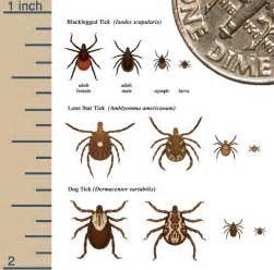 Garden Centers Maine by Lyme Disease