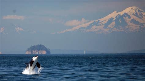 moment  conservation zen weve  orca sounds