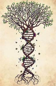 30 best images about Yggdrasil tattoo on Pinterest | Trees ...