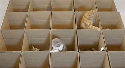 Boxes Cats Gifs Could Cat Cardboard Paradise