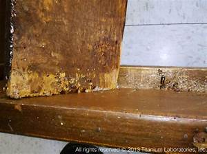 bed bugs pictures titanium laboratories inc With bed bugs in wood