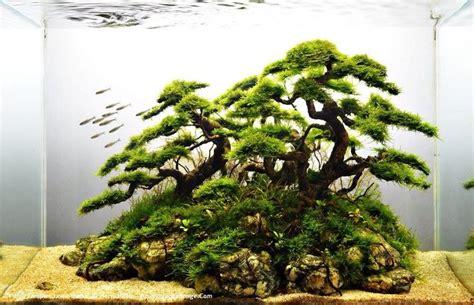 Bonsai Aquascape by Driftwood And Java Moss Faux Bonsai Aquaria And