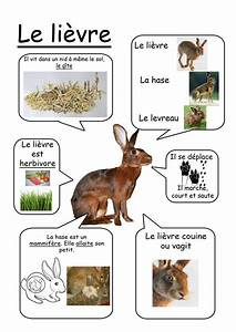 27 best images about sciences maternelle on Pinterest ...