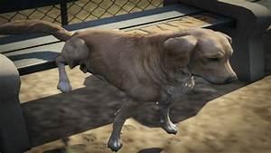 Dogs - GTA Wiki, the Grand Theft Auto Wiki - GTA IV, San ...