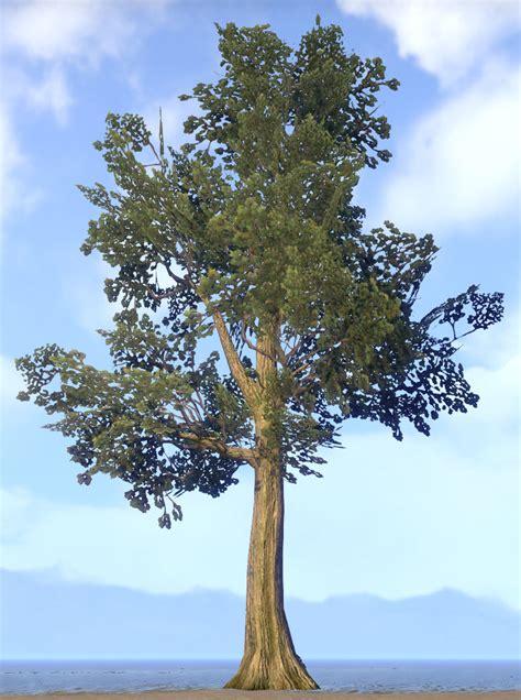 eso fashion tree strong maple elder scrolls