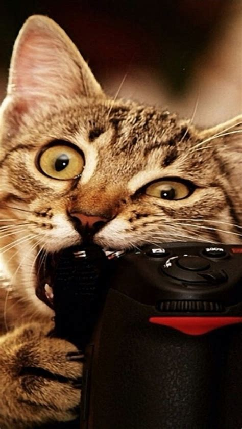 funny cat iphone     iphone  wallpapers