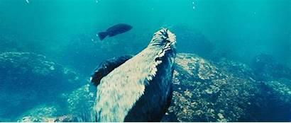Iguana Marine Godzilla Dopeness Tgif Pop