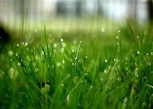 Traitement Mauvaise Herbe : entretien traitement pelouse gazon rive nord qu bec l vis ste foy beauport cap rouge ~ Melissatoandfro.com Idées de Décoration