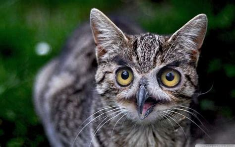 wide eyed animal hybrids cats  owl faces