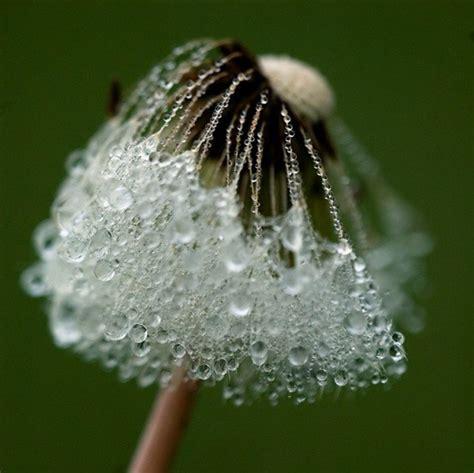 extraordinary moments  rain  dew photography