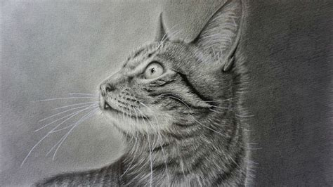 draw  realistic cat  pencil step  step youtube