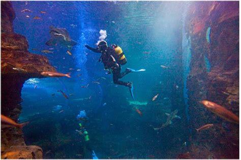 visita el aquarium de donosti