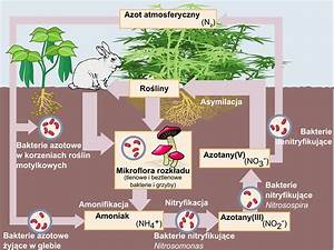File Nitrogen Cycle
