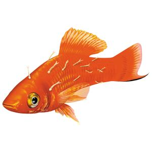 major aquarium fish diseases   symptoms