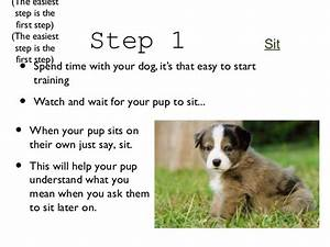 how to train your dog 2 With how to properly train a dog