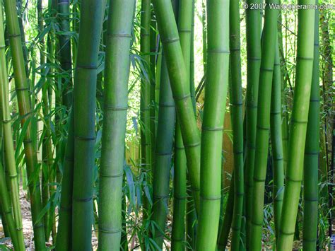 bamboo garden images bamboo hd wallpaper 2017 2018 best cars reviews