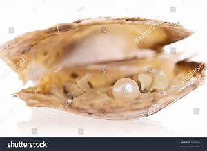 Pearl Inside Oyster Shell Stock Photo 4204993 - Shutterstock