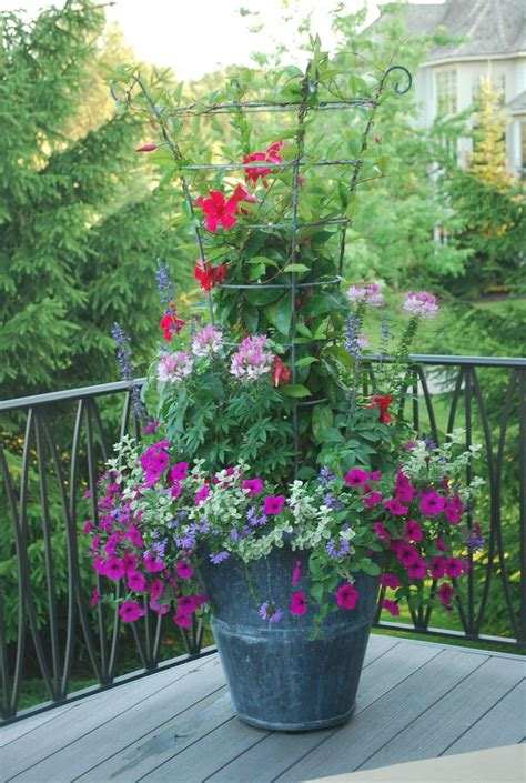 Container Gardening Deborah Silver Betty Gardens