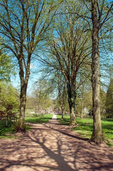 alberi e siluette di primavera lungo un percorso del parco fotografia stock immagine di