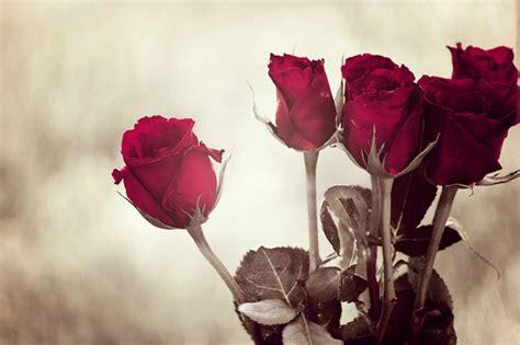 Red Rose Beautiful Flowers Desktop
