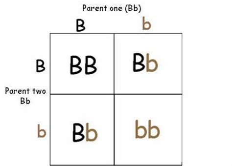 punnett square eye color just slightly neurotic nobody puts baby blue in a corner
