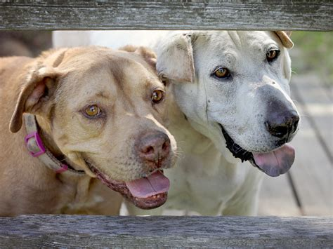 dog  die  photographer promotes senior