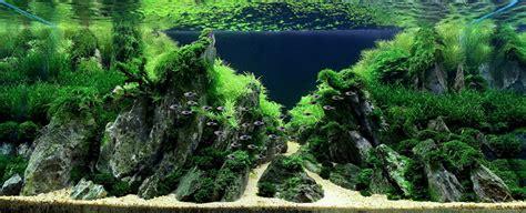 Iguwami Aquarium  The Simple Aquascape Aquariuminfoorg