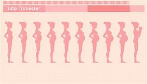 Schwangerschaft 3 Trimester : zwangerschapskalender zwangerschap van week tot week ~ Frokenaadalensverden.com Haus und Dekorationen
