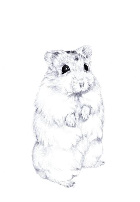 hamster drawing google search artistic pinterest