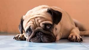 Vermieter Verbietet Hund : toby bleibt warum vermieter hunde nicht einfach verbieten ~ Lizthompson.info Haus und Dekorationen