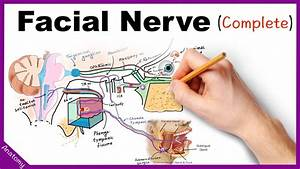 Facial Nerve Anatomy Simplified