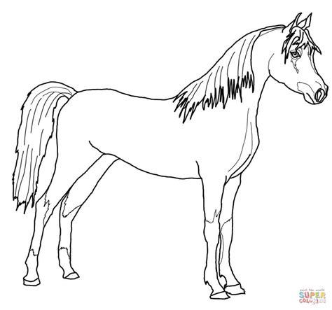 disegno  cavallo arabo da colorare disegni da colorare