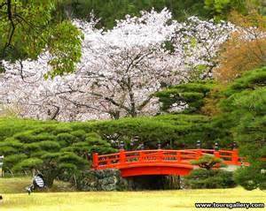 Japanese Cherry Blossom Garden Japan
