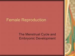 Female Reproduction Study Guide