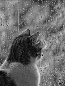 Looking out the window - rain, rain go away...   Weather ...