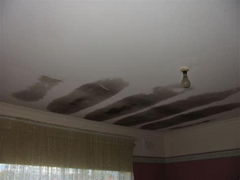 mould asbestos identification active building pest
