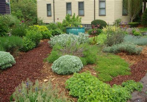 backyard grass alternatives grass free yard options the boston globe
